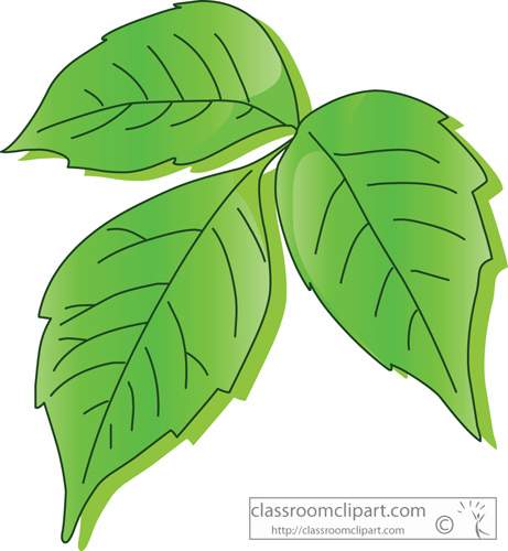 Plants   Poison Ivy Leaf   Classroom Clipart