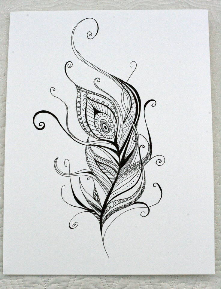 Black And White Peacock Feather Designs Galleryhipcom