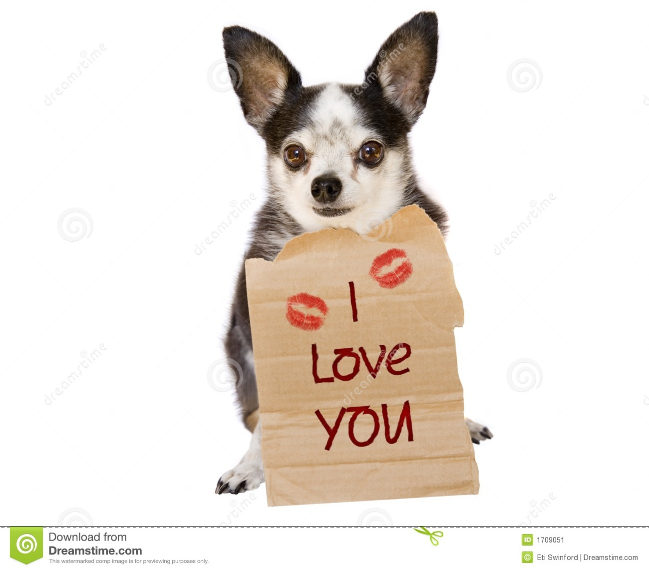 Happy Valentines Day To The One You Love From A Chihuahua Dog