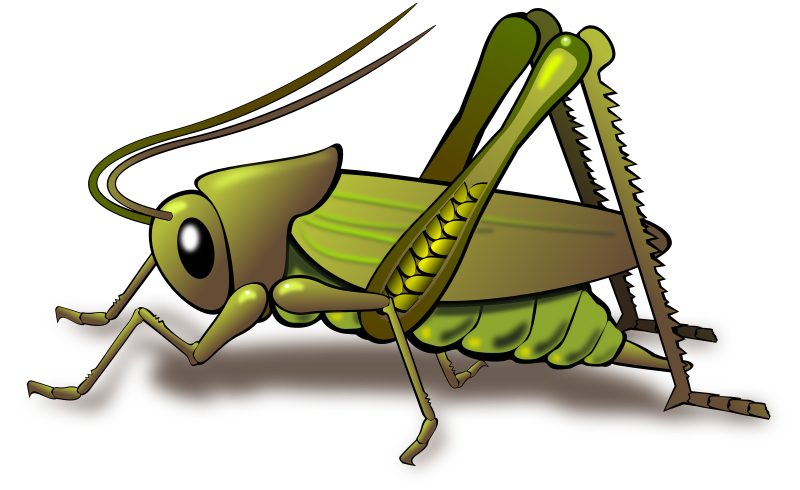 Cricket By Dux Phoenix   A Cricket Is An Insect With Somewhat