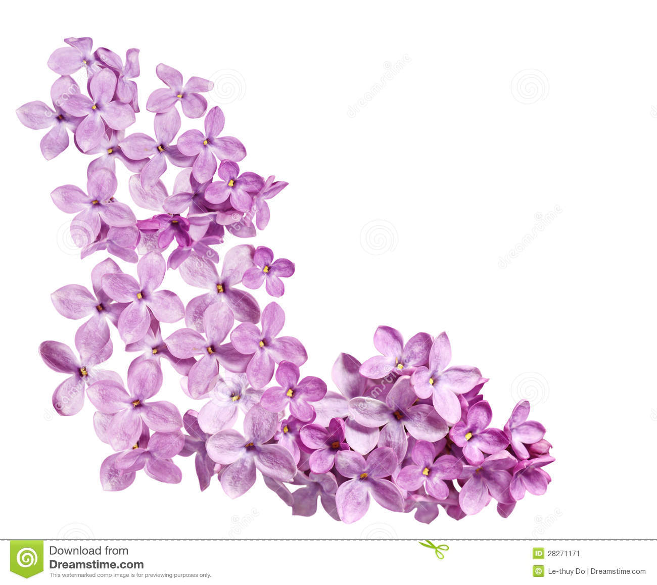 Pink Purple Lilac Flower Arranged As Corner Of Frame