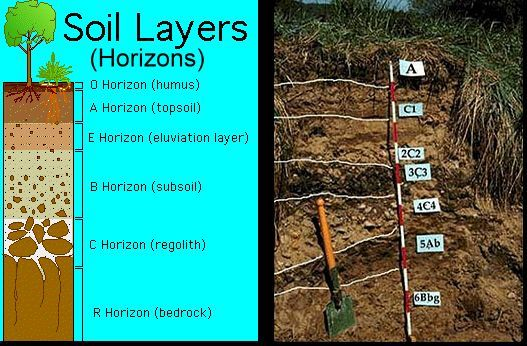 Layers of soil clipart clipart suggest for Soil horizons layers