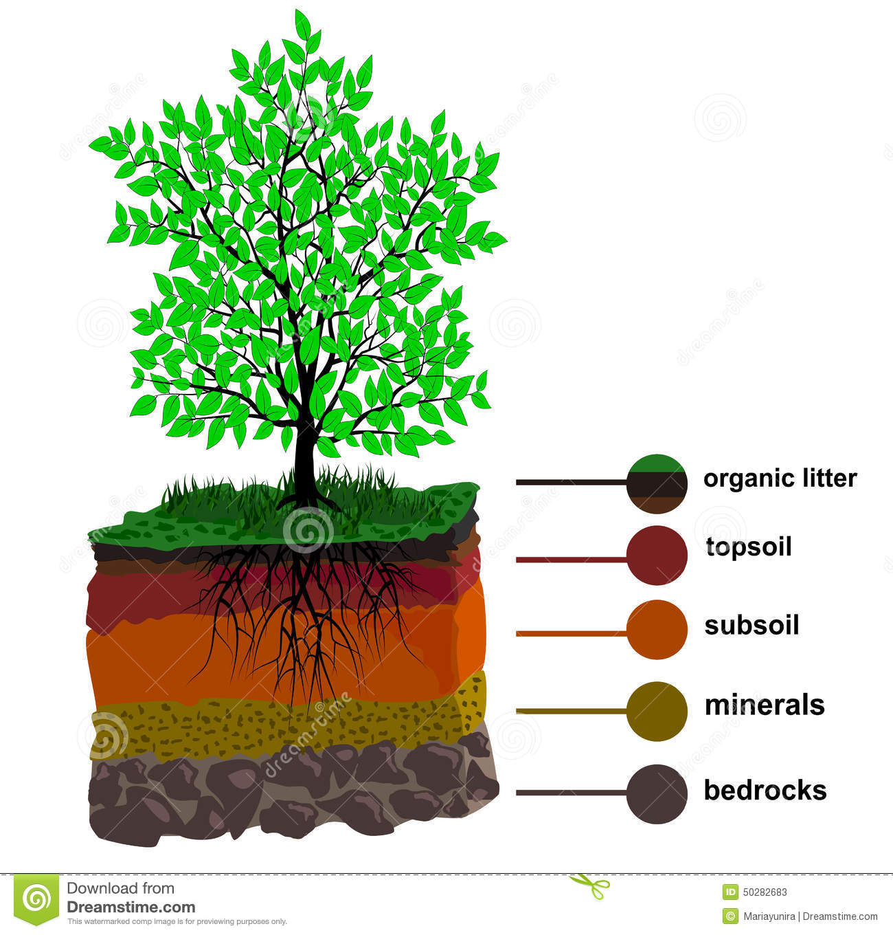 Layers of soil clipart clipart suggest for What are the different layers of soil