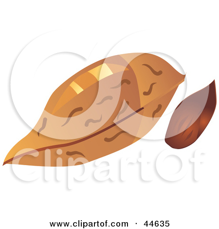 almond drawing clipart clipart kid