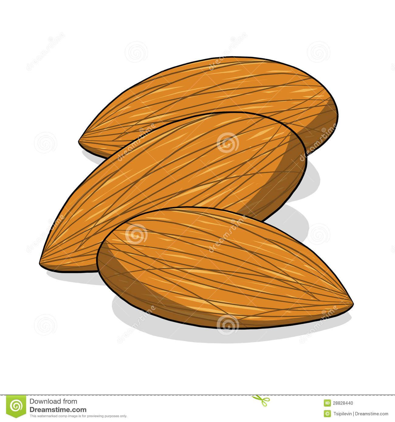 tree nut clip art - photo #13