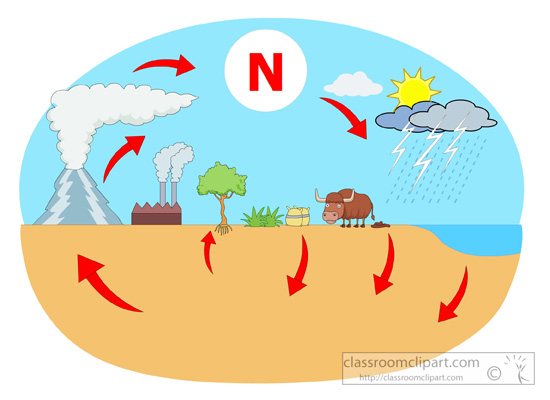 Science   Nitrogen Cycle Diagram   Classroom Clipart