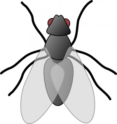 Fly Bug Insect Clip Art Free Vector In Open Office Drawing Svg    Svg