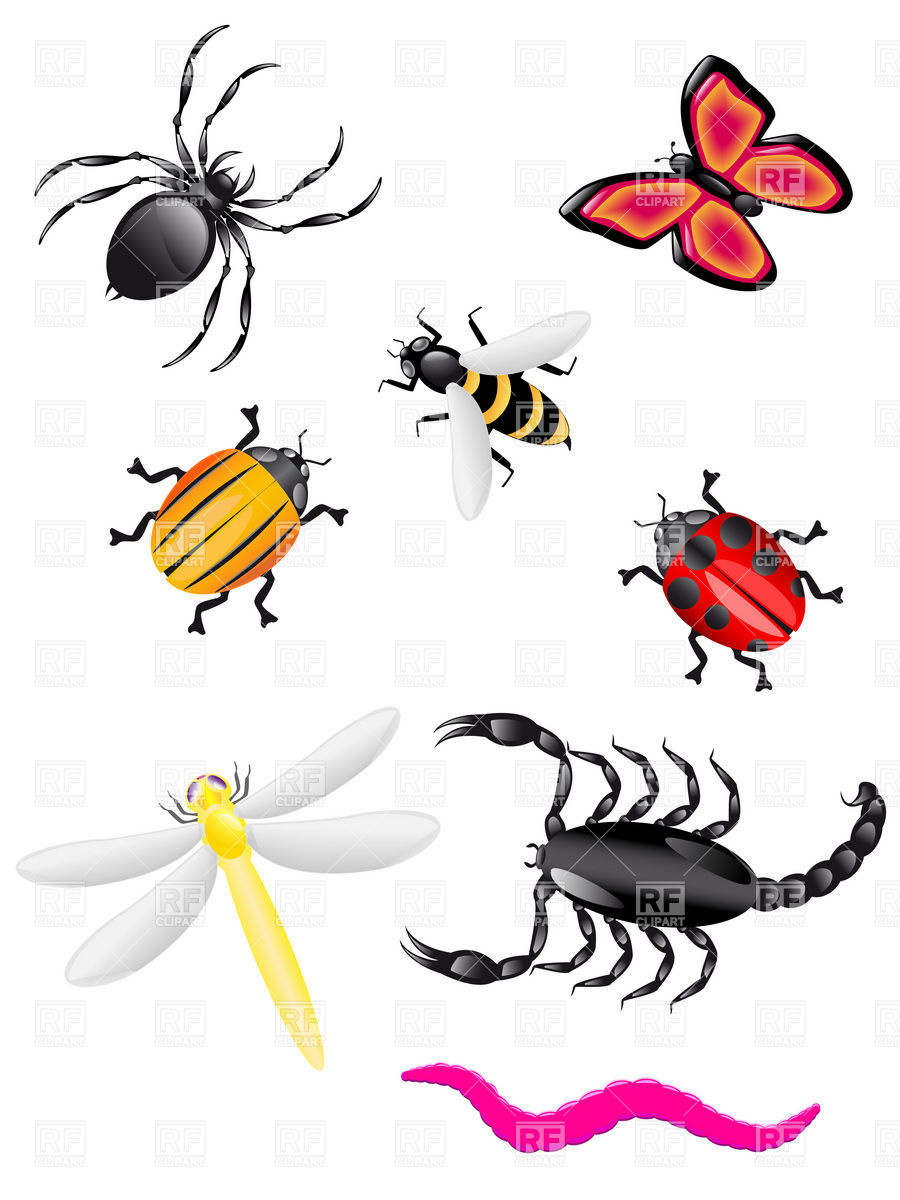 Insects 19138 Plants And Animals Download Royalty Free Vector Clip