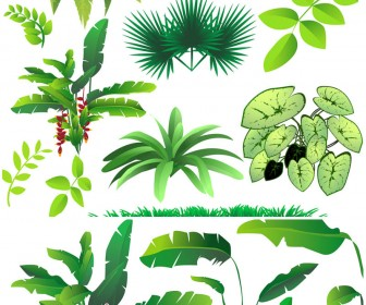 Set Of 12 Vector Rainforest Plants Templates For Your Jungle Related