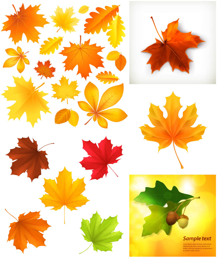 Autumn Leaves Vector Clipart   Temotato S Vector Depot