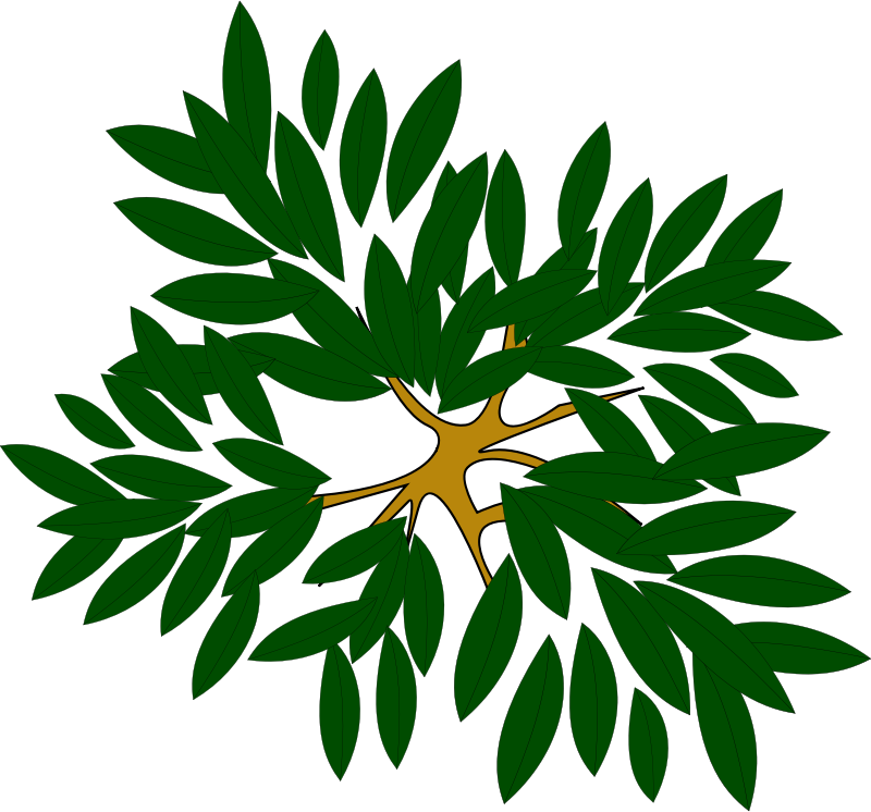 Tree Top Clipart - Clipart Suggest