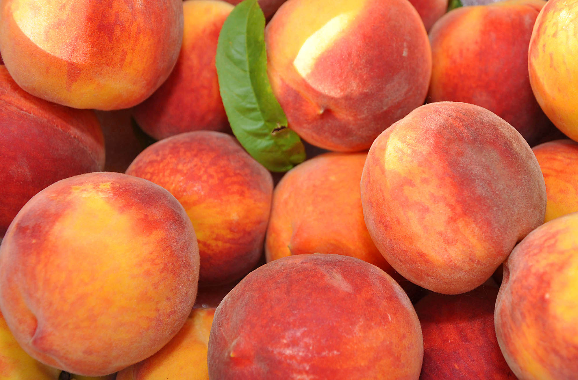 Key Points Whether To Grow Peaches   What Grows There    Hugh Conlon