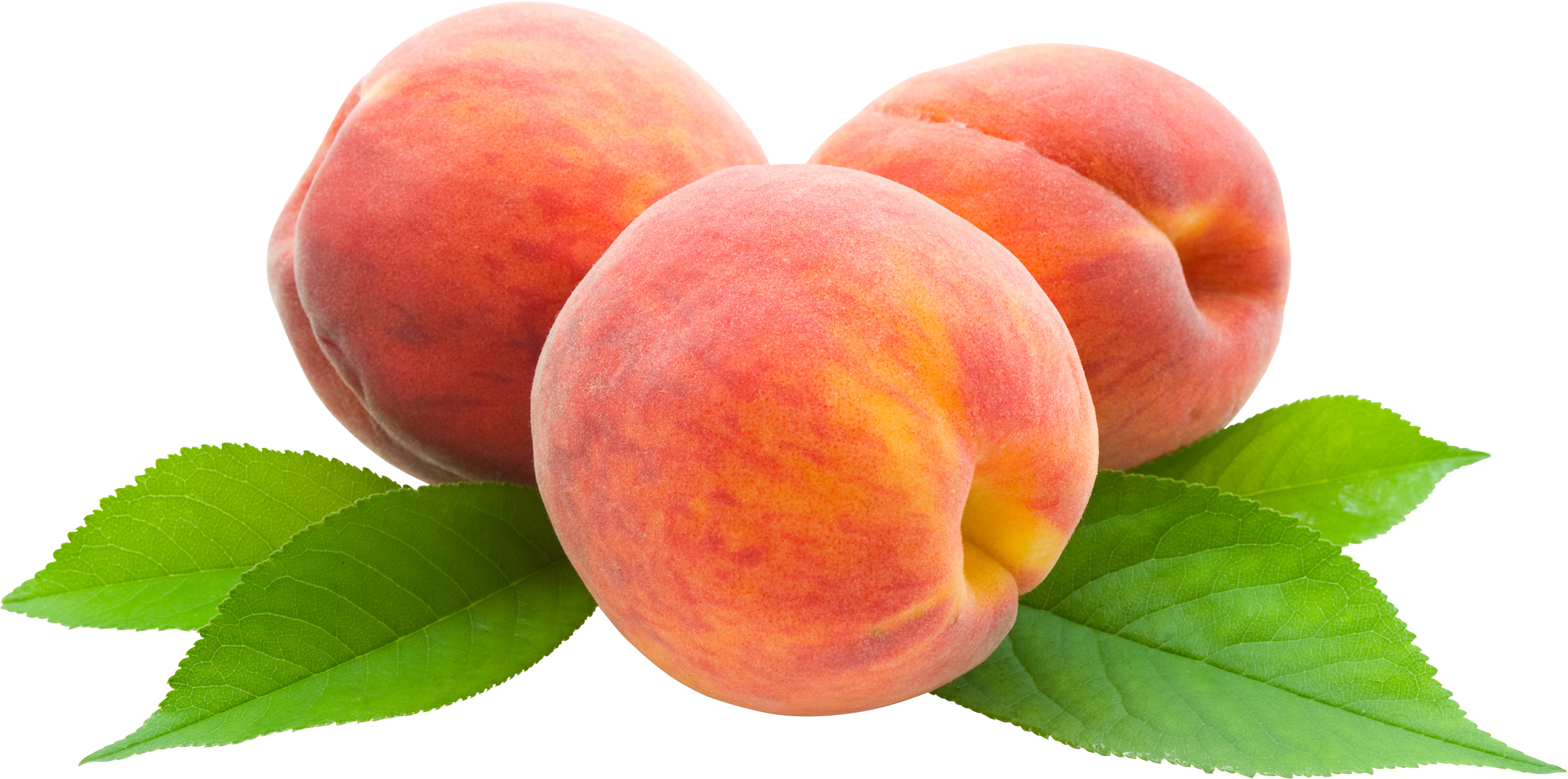 Peach Png Image In This Page You Can Download Png Image Peach Png