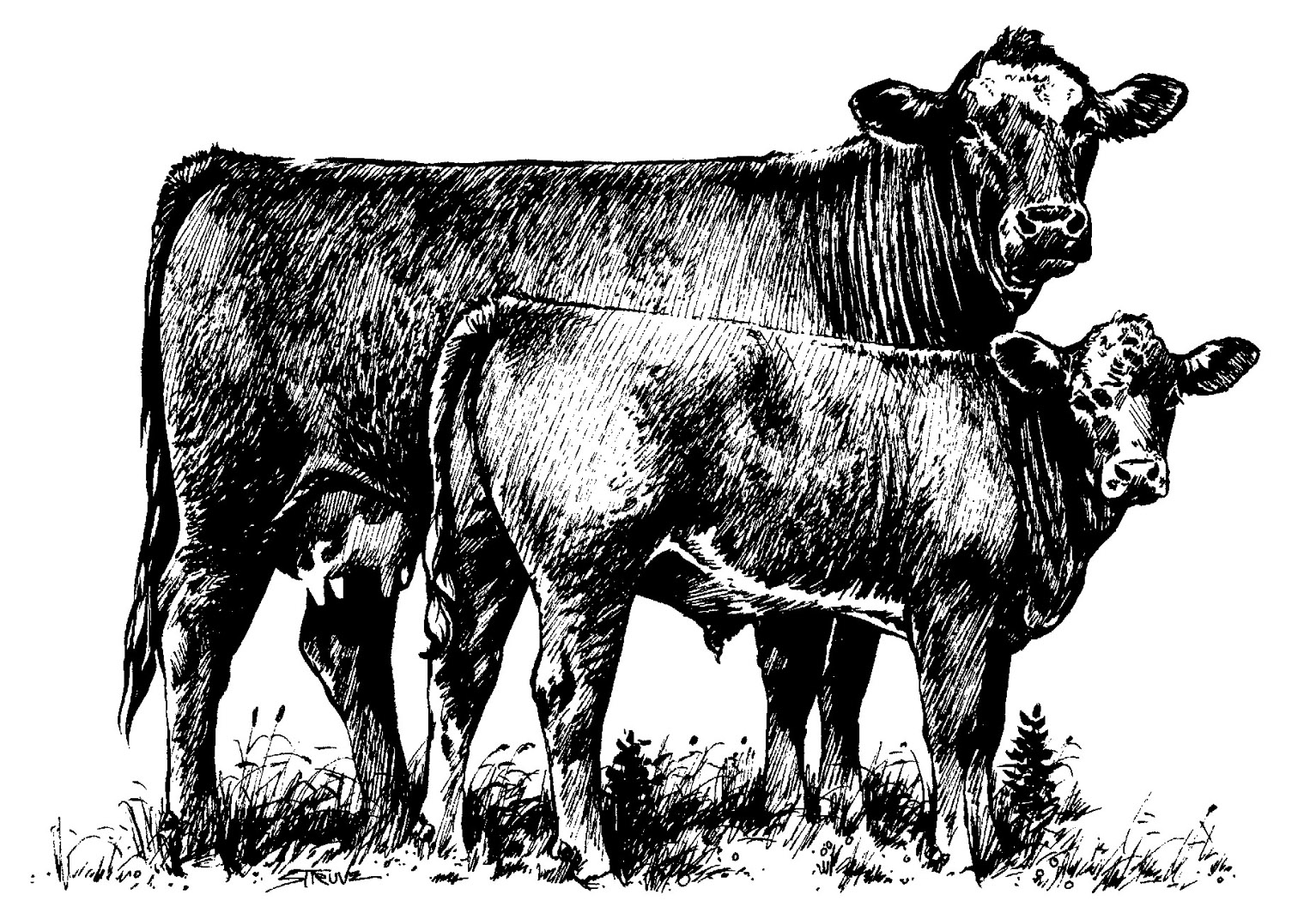 Cattle Clip Art 1