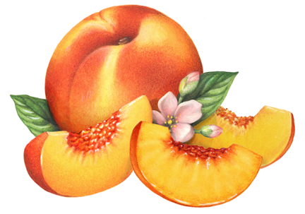 Peach Slice Png Whole Peach Peach Slice Png