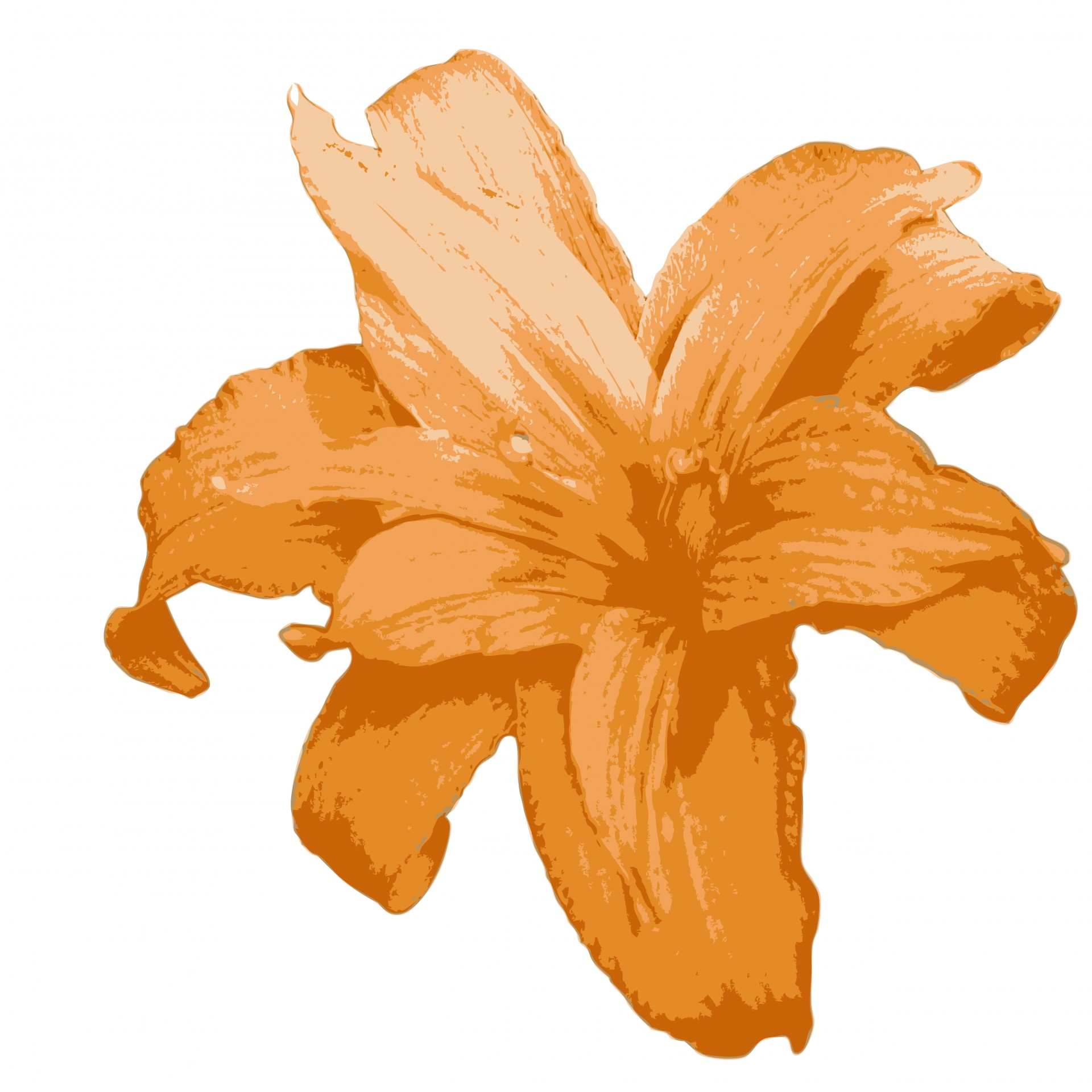 Orange Lily Flower Clipart Free Stock Photo Hd   Public Domain