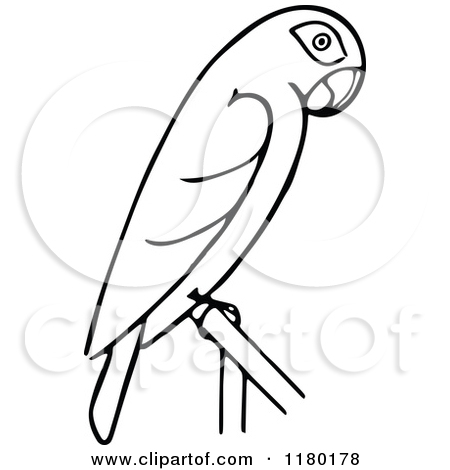 Parrot Black And White Clipart - Clipart Kid