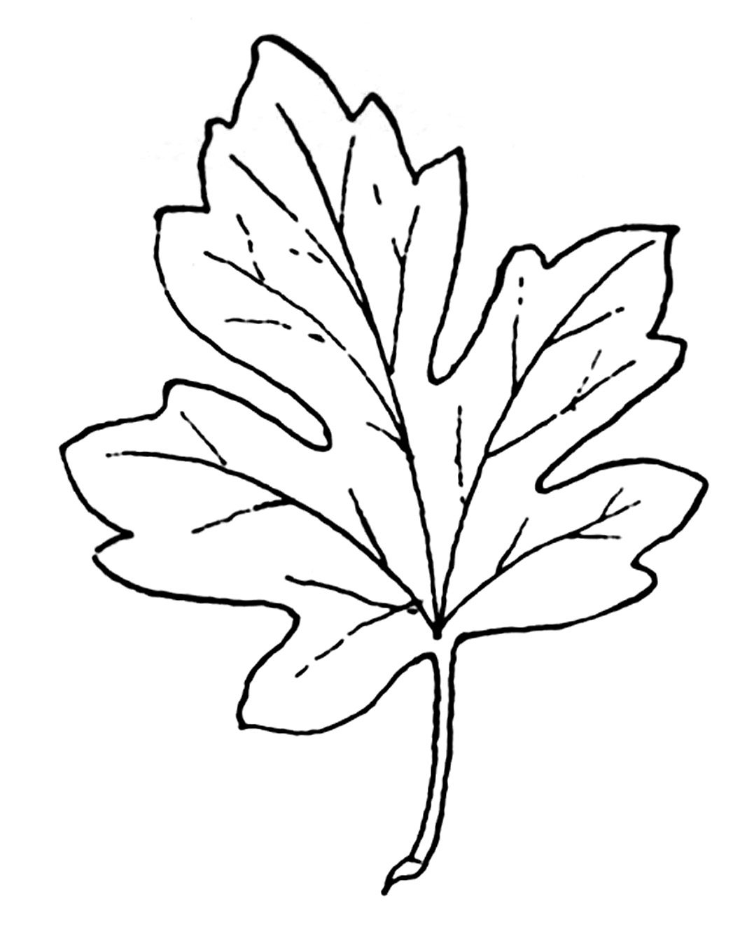 ... black and white clipart - clipart kid Fall Leaf Border Black And White: wesharepics.info/imagefgkl-fall-leaf-border-black-and-white.asp