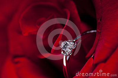 Red Rose And A Diamond Ring For A Marriage Proposal