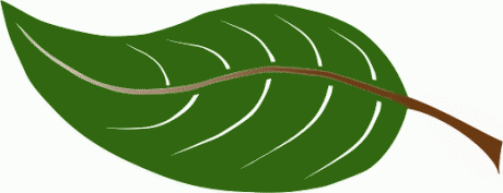 Leaf Clipart Picture