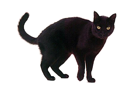 Fat Black Cat Clipart   Cliparthut   Free Clipart