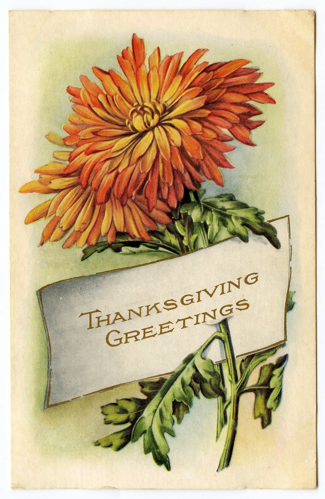 Vintage Thanksgiving Clip Art   Mums   Placecard   The Graphics Fairy