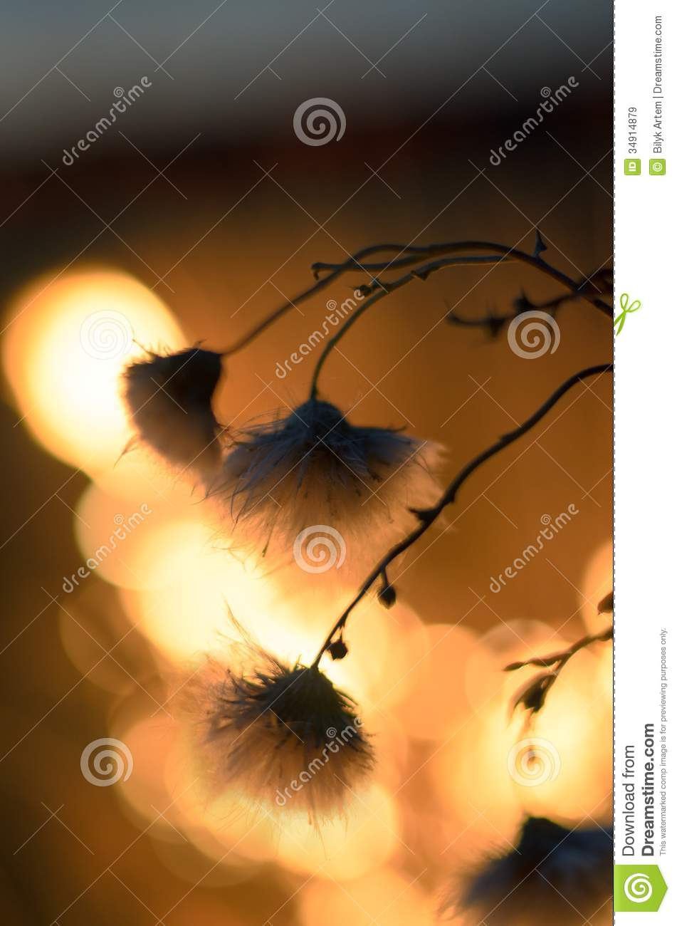 Withering Plants  Royalty Free Stock Images   Image  34914879