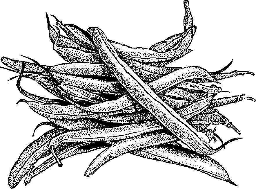 Clip Art Black Beans Clipart - Clipart Suggest