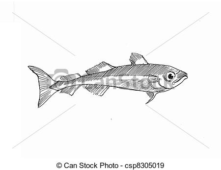 Cod   Pen Drawing Of An Arctic Cod Csp8305019   Search Vector Clipart