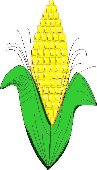 Corn Plant Clipart Clip Art  Plant