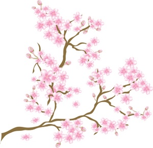 Images Cherry Blossoms Stock Photos   Clipart Cherry Blossoms Pictures