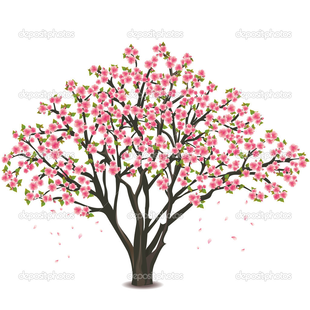 Japanese Cherry Tree Blossom Over White   Stock Vector   Silvionka