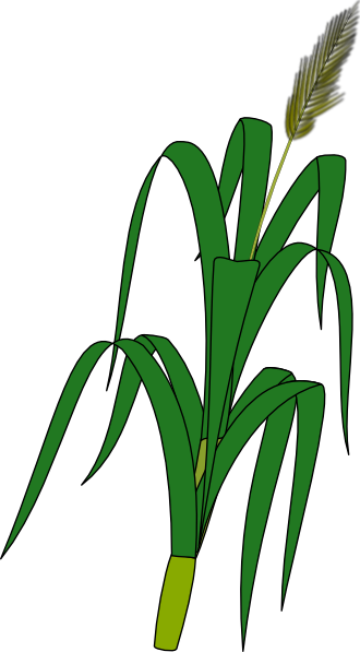 Wheat Plant Food Clip Art At Clker Com   Vector Clip Art Online