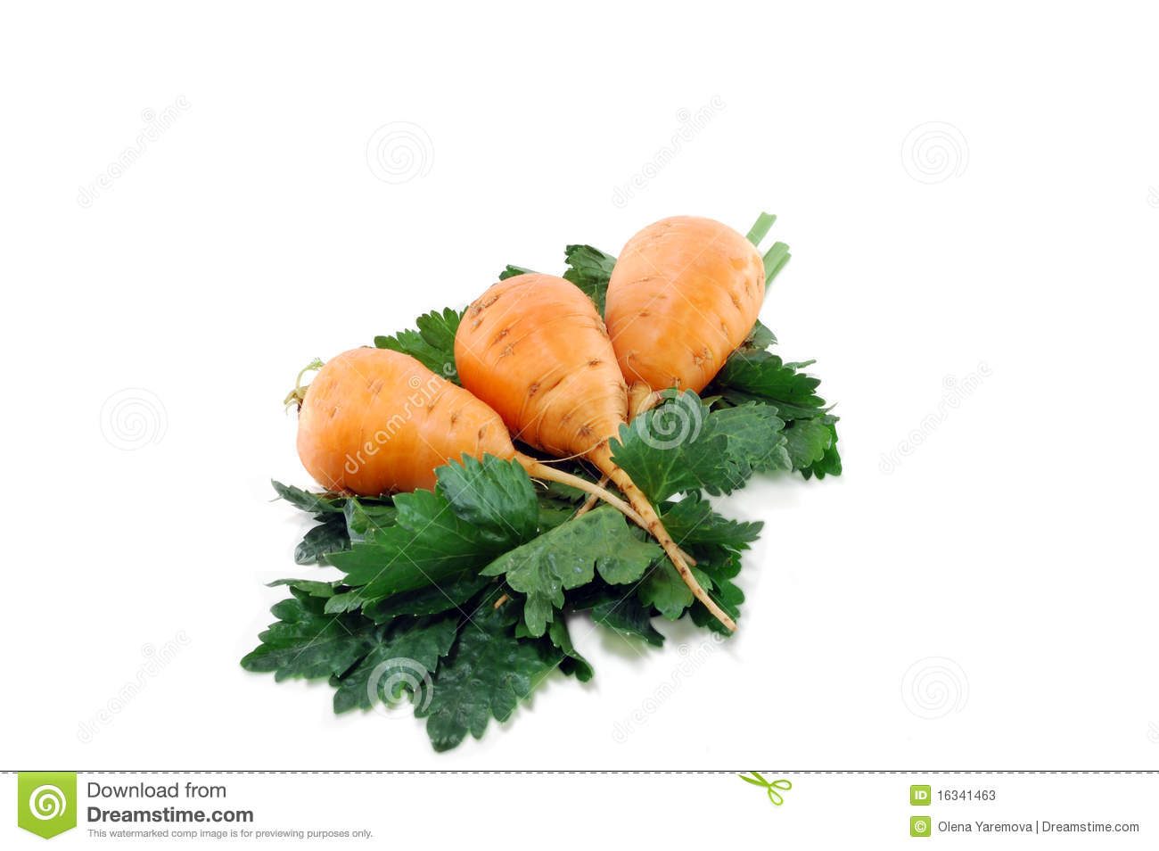 Carrots And Celery Greens Stock Photos   Image  16341463
