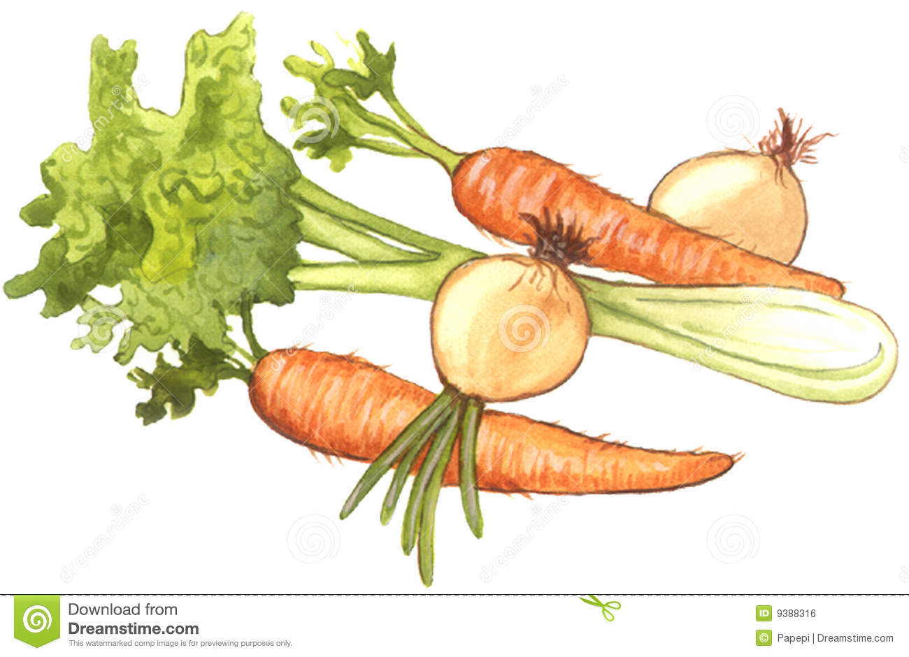 Celeryonions And Carrots Royalty Free Stock Image   Image  9388316