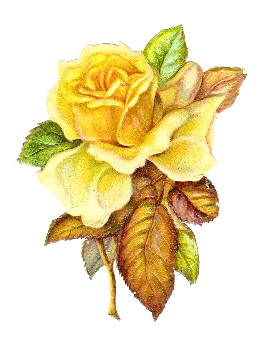 Yellow Roses Are My Favorite Flowers This Beautiful Piece Of Rose Clip