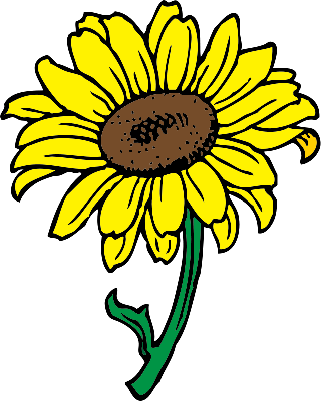 Sunflower Clipart Royalty Free Flower Images   Flower Clipart Net