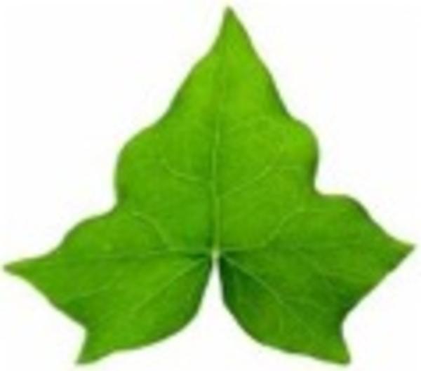 Ivy Leaf Border Clipart - Clipart Kid