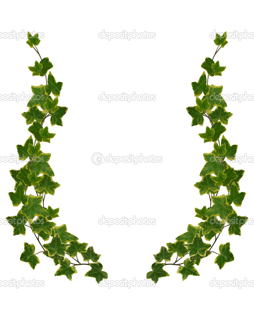 Leaf Border Clipart Ivy Border Clipart Pictures To Pin On Pinterest