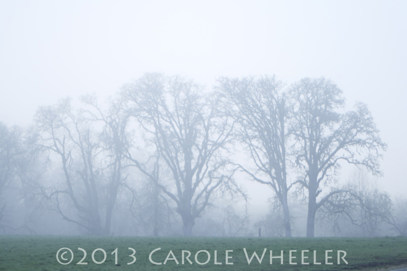 Foggy Clipart Sunday Photo   Foggy Day
