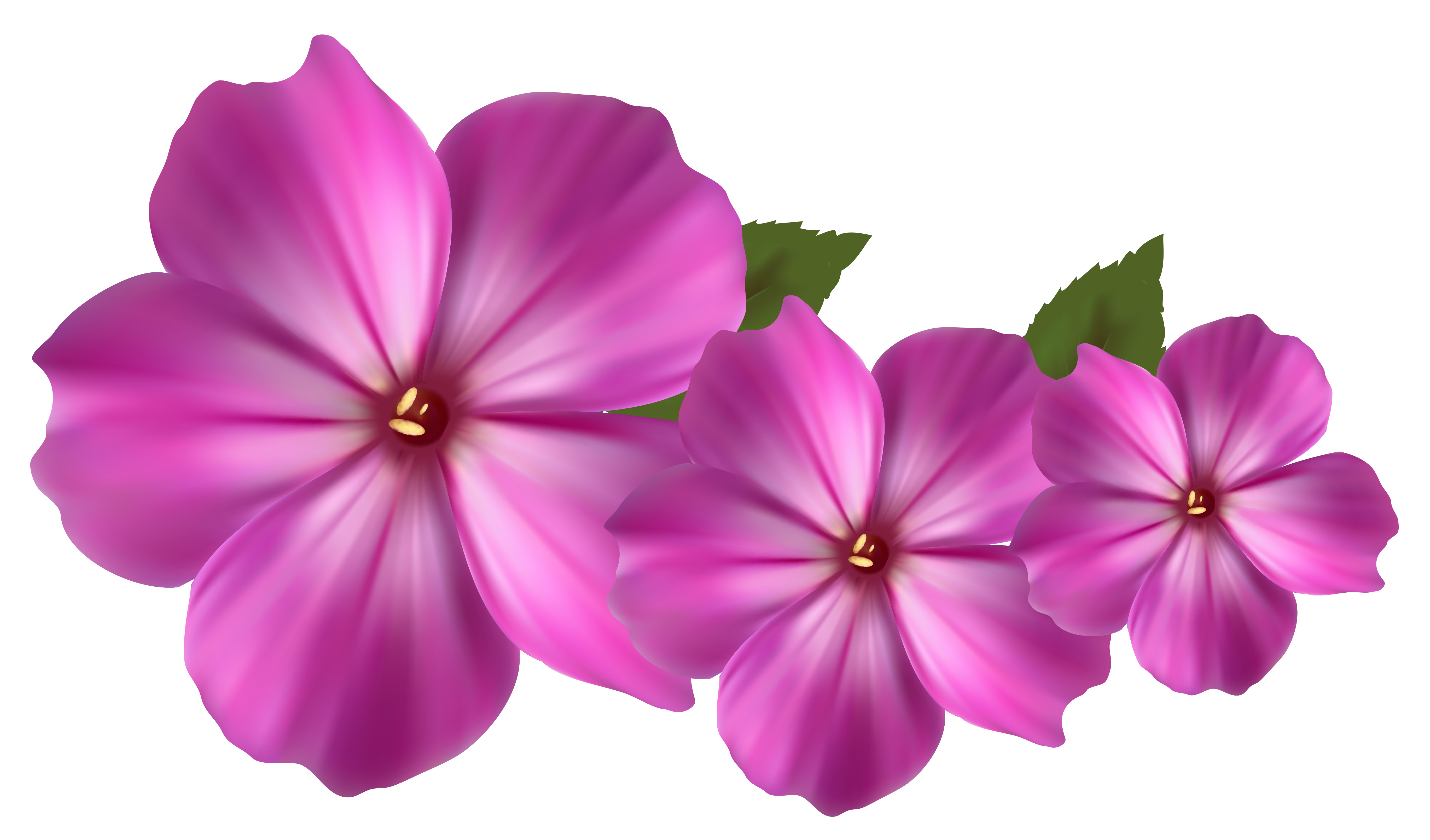 28 Flower Png   Free Cliparts That You Can Download To You Computer
