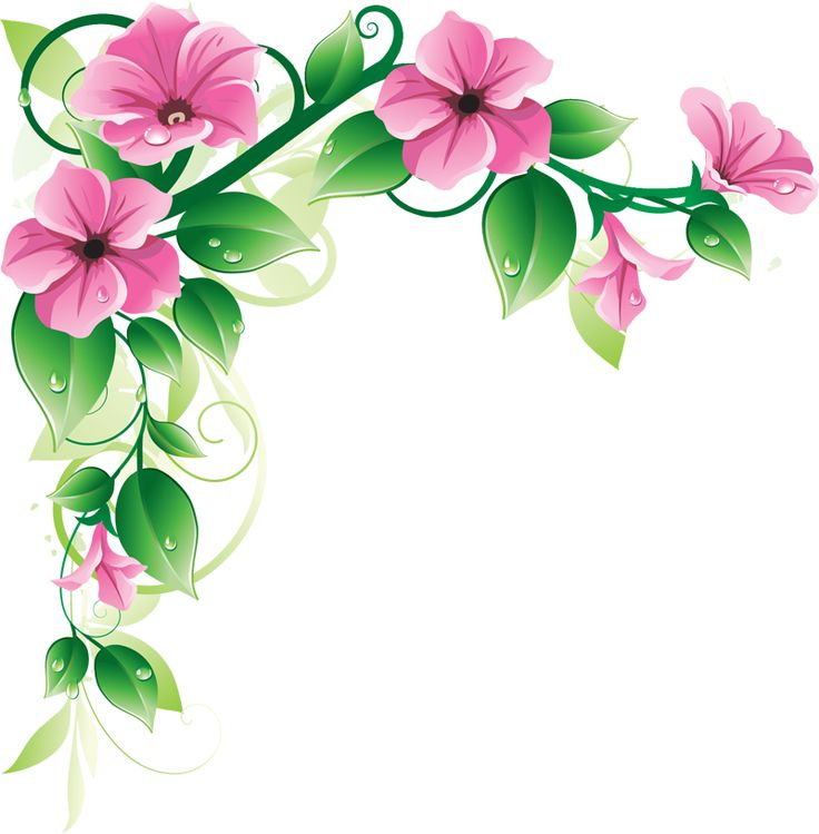 Pink Floral Flower Borders Flowers Border Design Floral Clipart