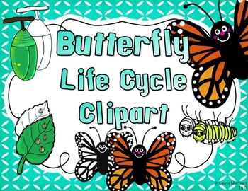 Butterfly Clipart  Life Cycle In 4 Stages
