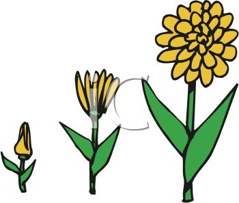Clipart Images 0511 0904 1500 5559 Stages Of A Flower Growing Clipart