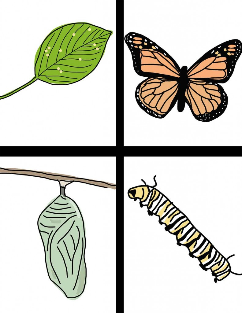 Life Cycle Of The Butterfly  Hand Drawn Clipart   Ezk12lessons Com