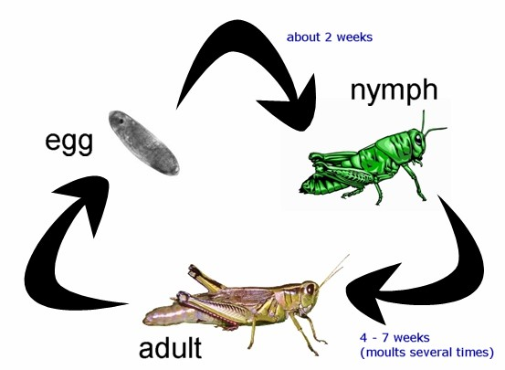 Metamorphosis   Alioting   Best Information