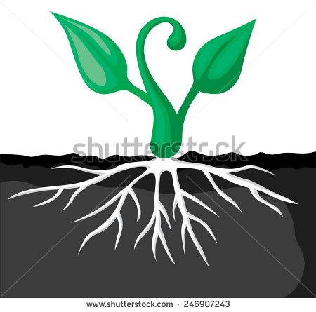 You Searched For Germination Of Seeds And Sprouts Vector Illustration