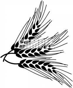 Black And White Wheat   Royalty Free Clipart Picture