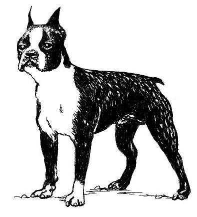 Http   Www Wpclipart Com Animals Dogs B Boston Terrier 2 Png Html