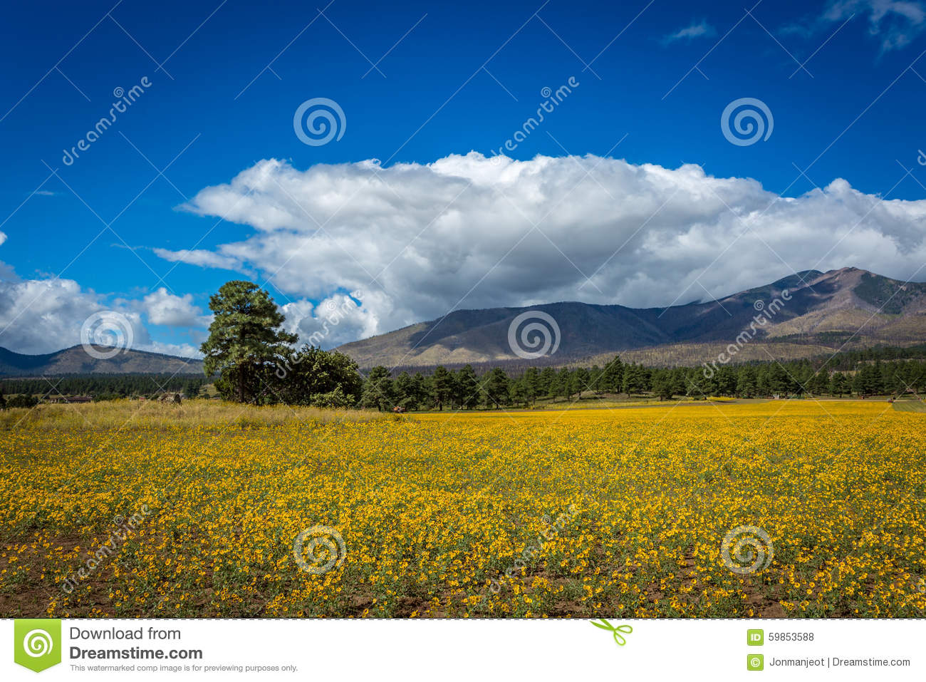 Amazing Scenes Of Mountain Field Meadow
